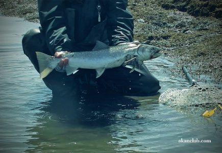 別寒辺牛川でドローン自撮りでいいアメマス釣れました