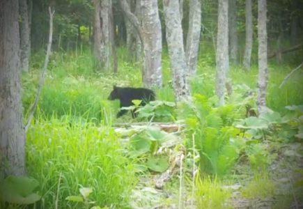 子熊に遭遇・・阿寒湖、硫黄山川の森